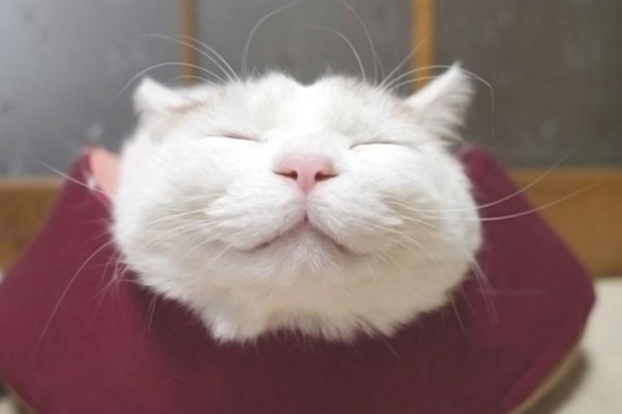 Shironeko, Happiest Cat Ever!