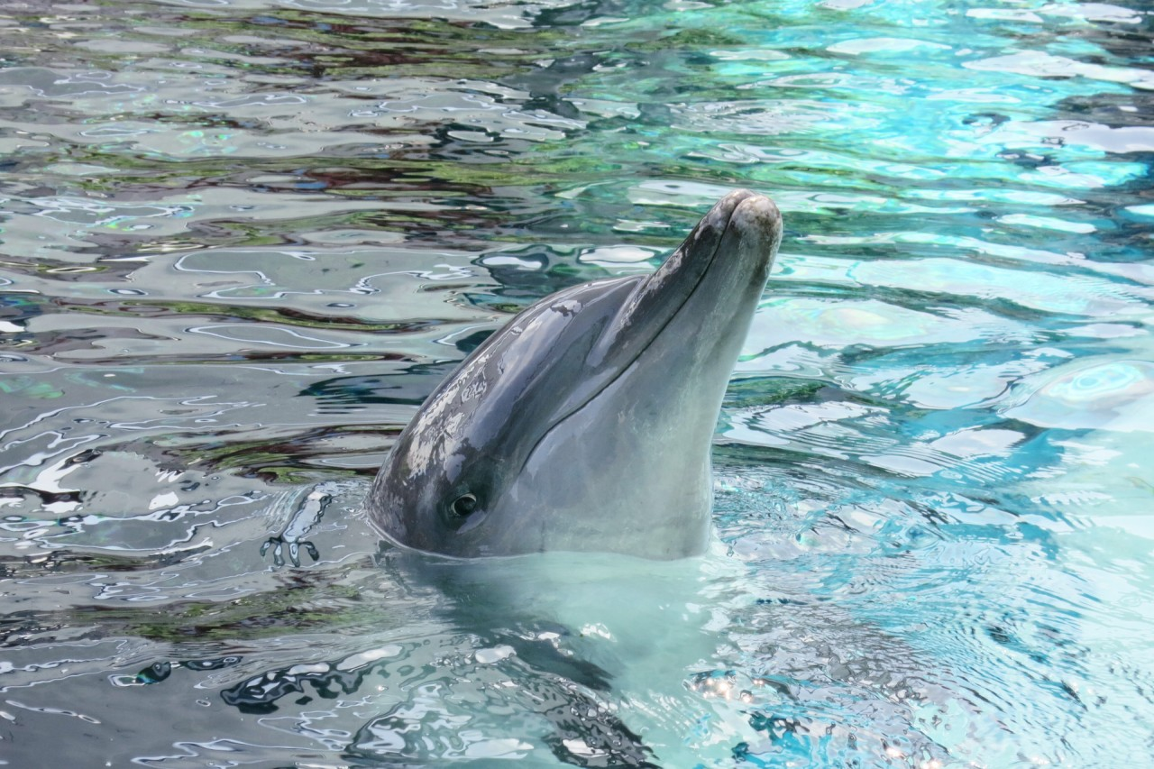 An unforgettable dolphin experience in Singapore