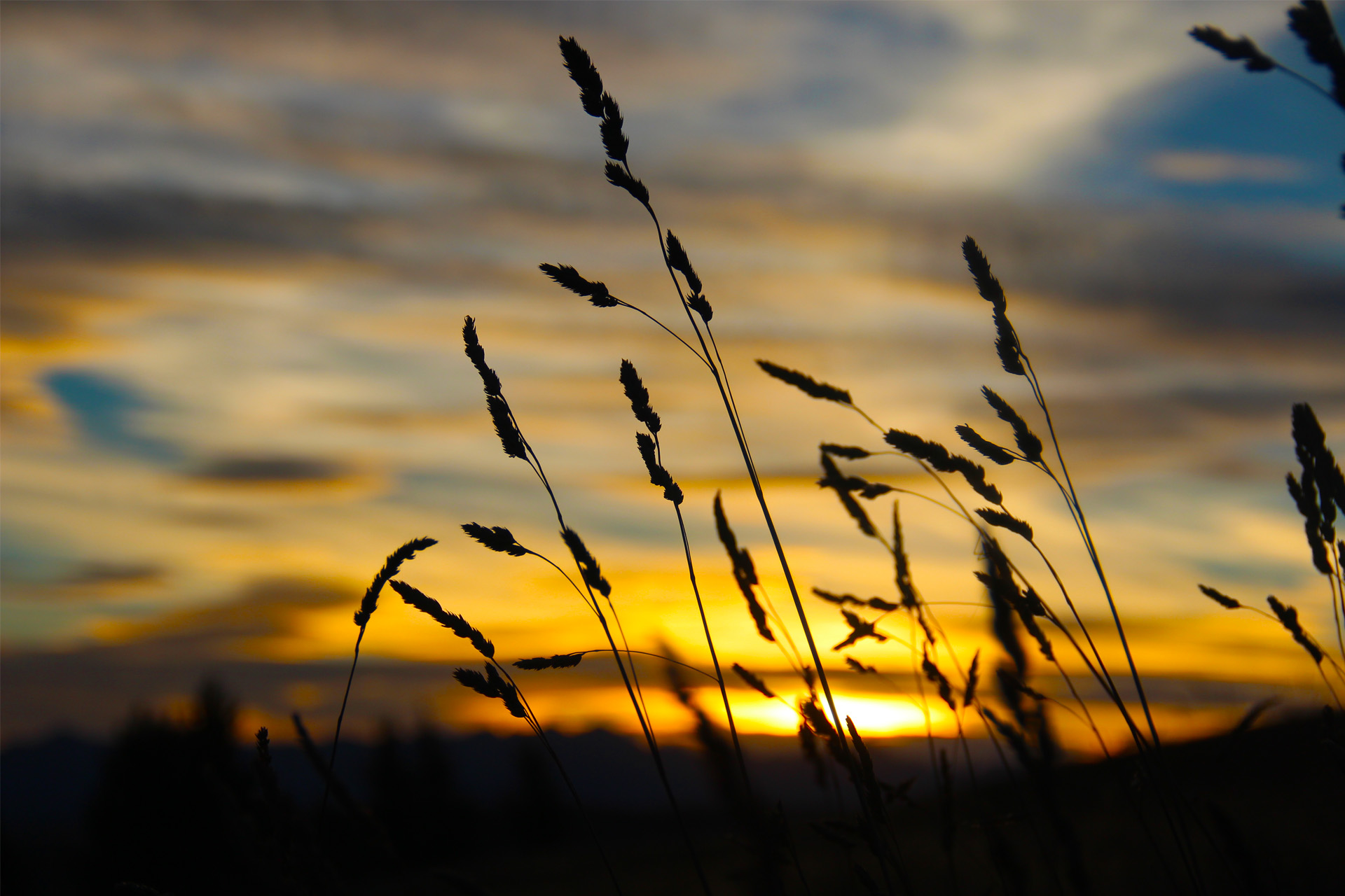 Tekapo Sunset