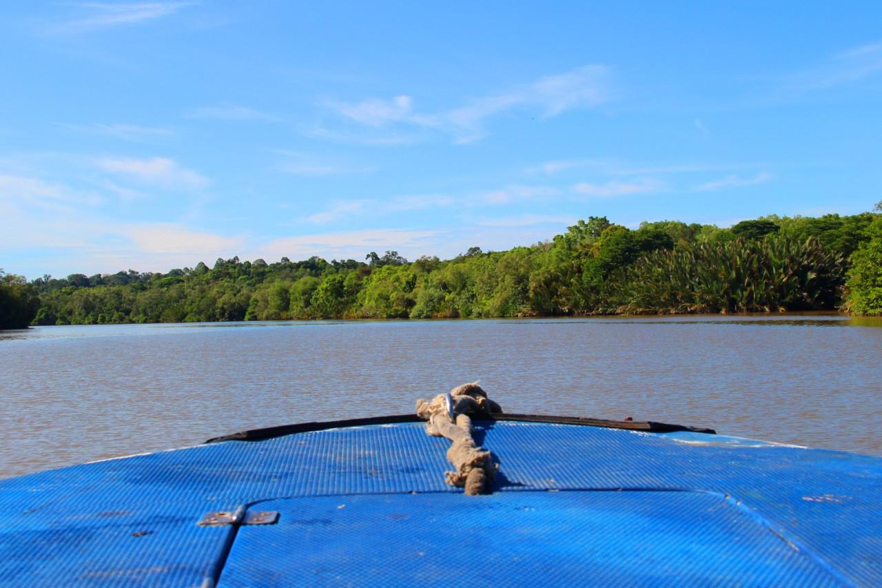 The Journey into the Pristine Rainforest of Brunei