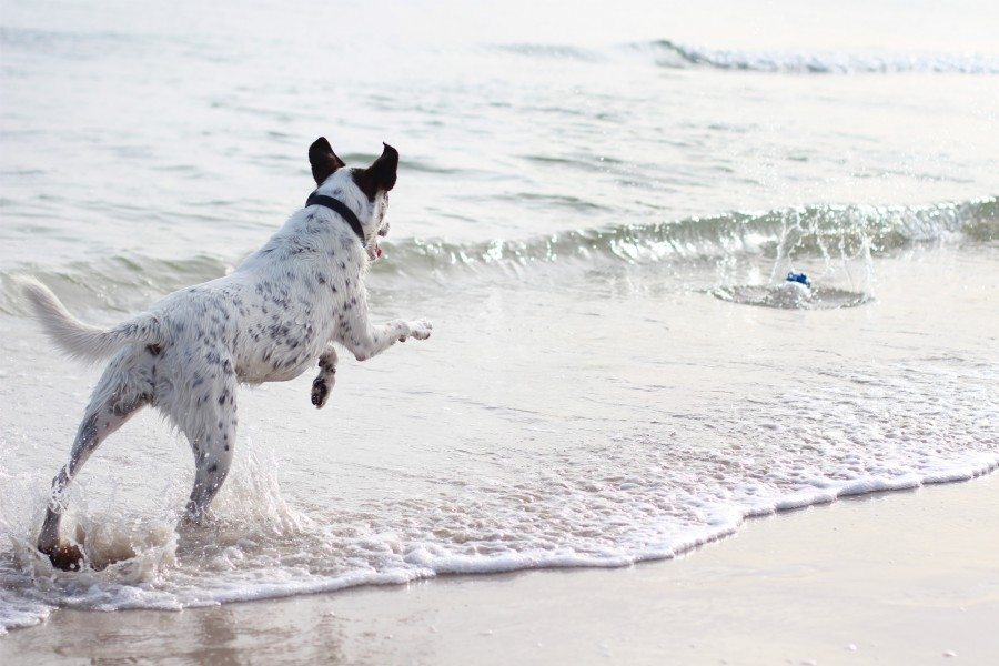 {PhotoJournal} Adelaide Beach Dog