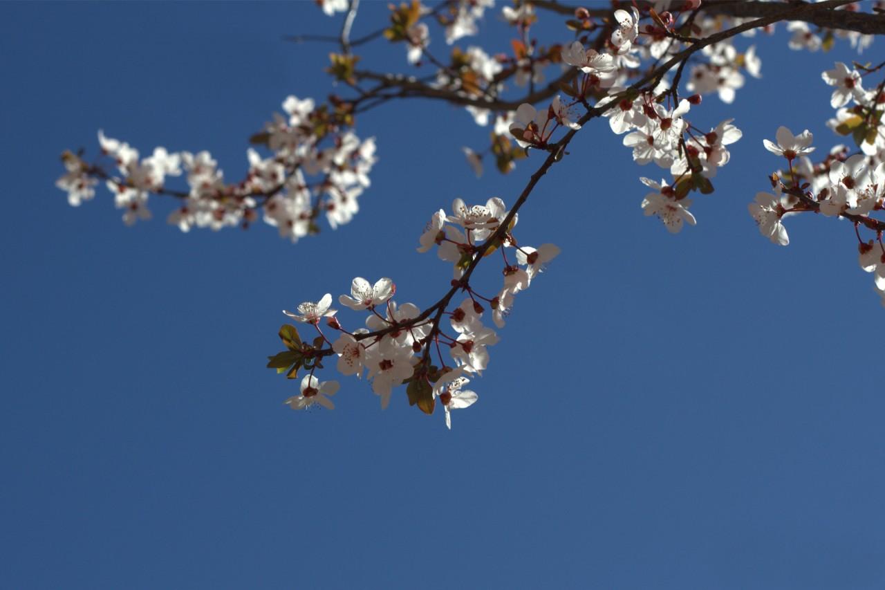 Springtime blossoms in Alcalá de Henares
