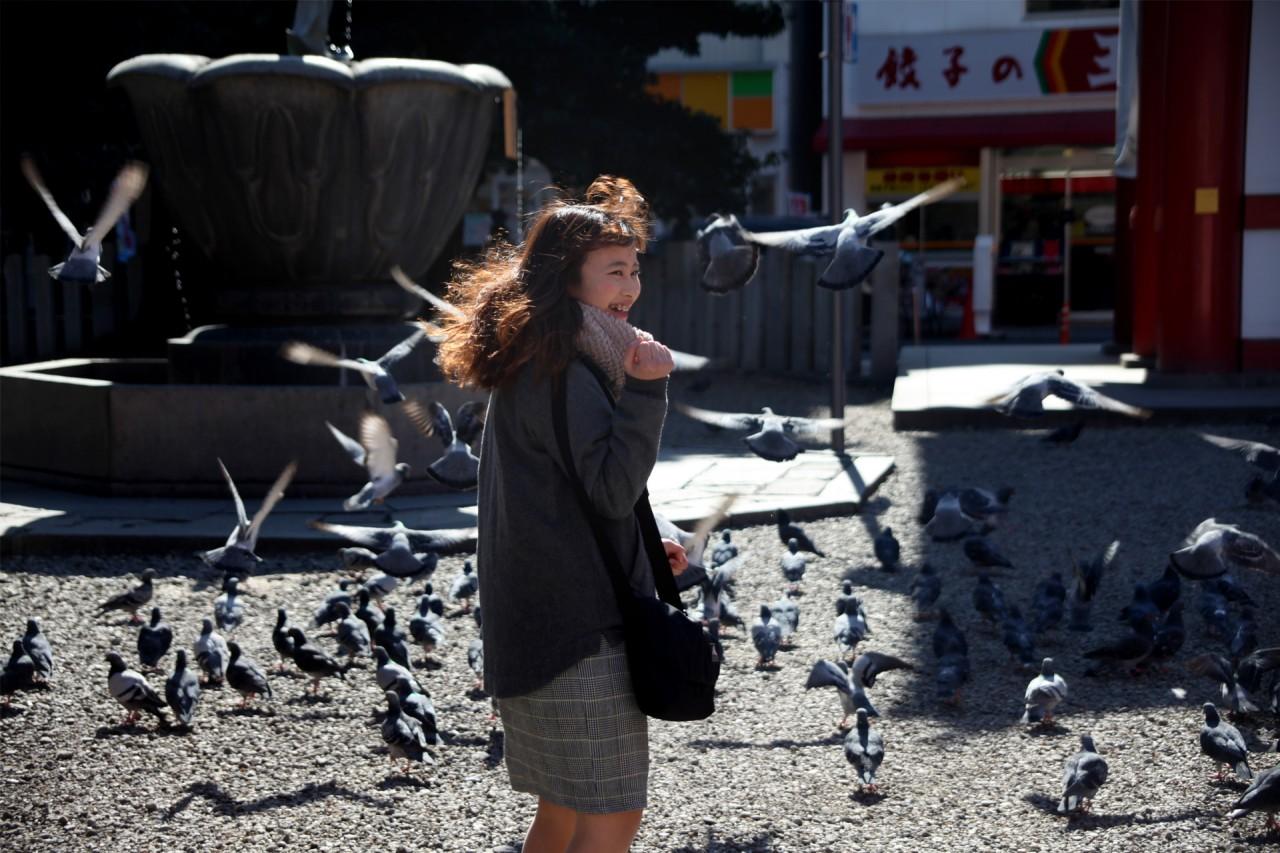 Flights of birds in Nagoya